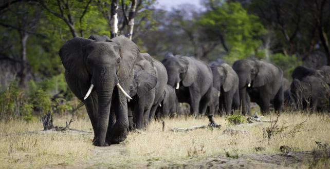 Safari à petit prix de 9 jours au parc national de Hwange et aux Ch..