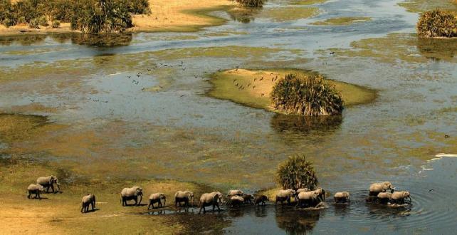9 jours d'aventure en safari itinérant en bivouac au Botswana & Chu..